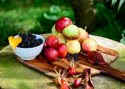Harvest Fruits